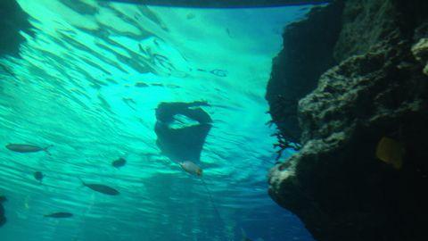 池袋サンシャイン水族館
