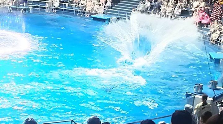 アクアパーク品川,イルカショー,混雑,席取り,ビショぬれ,対策,aquaparkshinagawa18072709